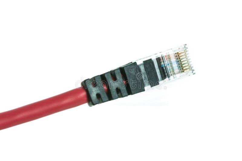 Sieć kabel z RJ45 odizolowywa zdjęcie stock