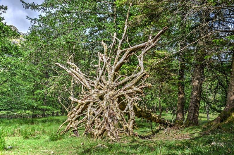 Sieć korzenie zdjęcie stock