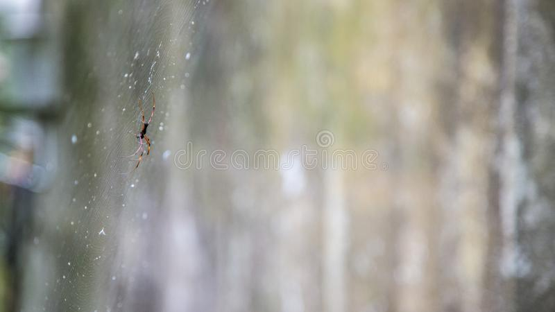 Sieć pająk w lasu państwowego terenie obraz royalty free
