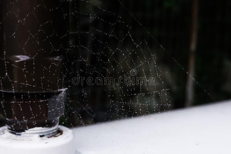 Sieć pająka sieć z podeszczowymi kroplami zdjęcia royalty free