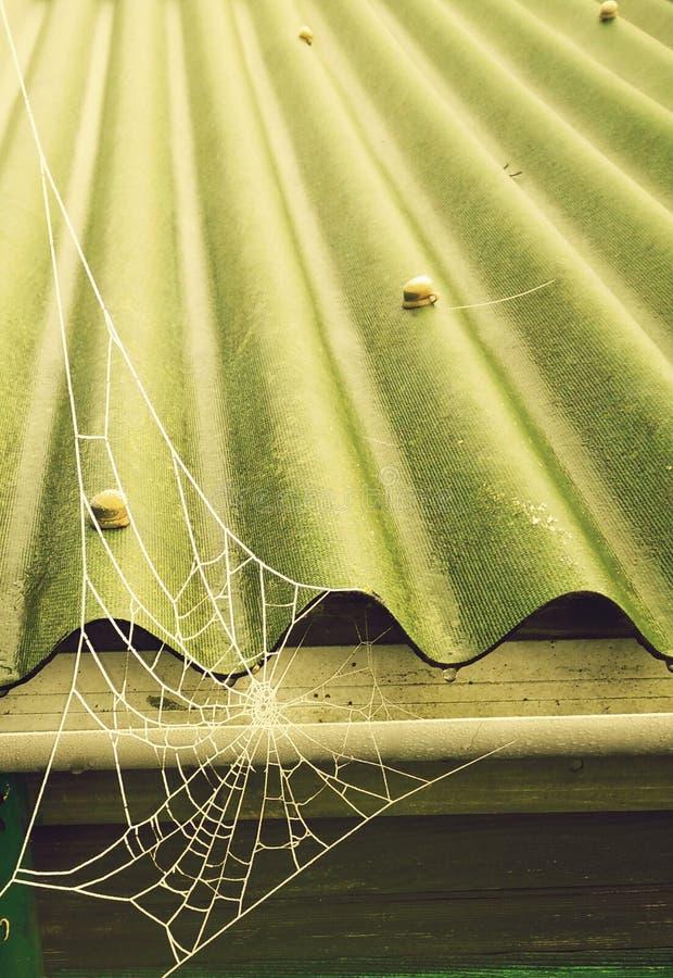 Sieć pająka zielona zima obrazy royalty free