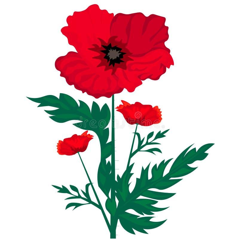 Sie? Dziki czerwony makowy kwiat odizolowywaj?cy na bia?ym tle wektor royalty ilustracja