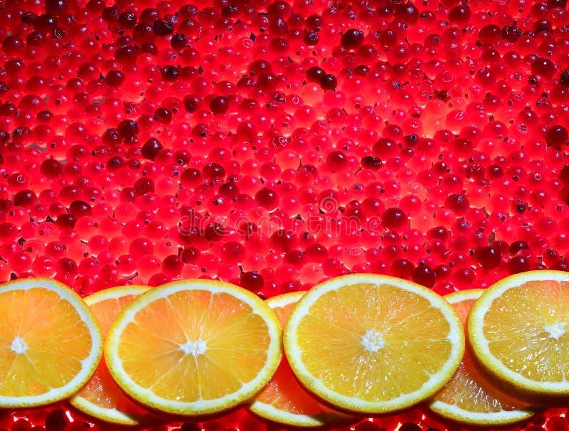 Sieben orange Scheiben auf Moosbeeren lizenzfreies stockbild