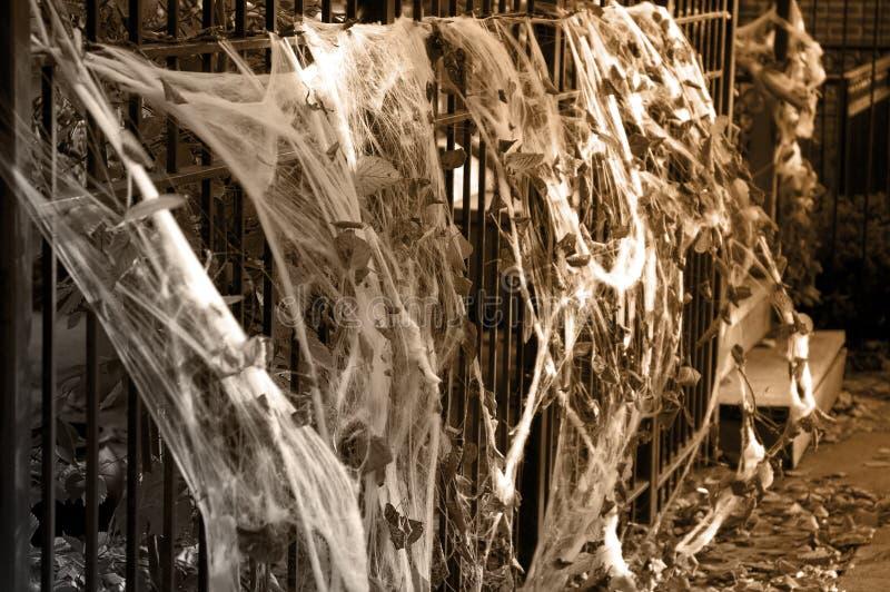 sieci pająka halloween. obrazy stock