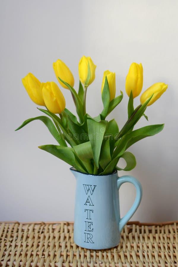 Siedem żółtych tulipanów zdjęcie royalty free