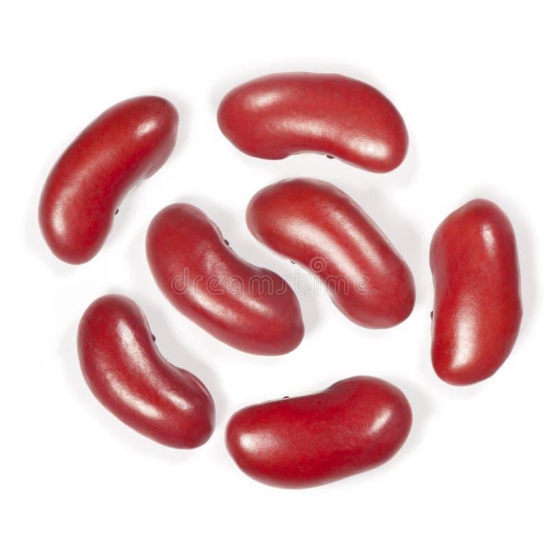 Siedem fasoli czerwone fasole obraz stock
