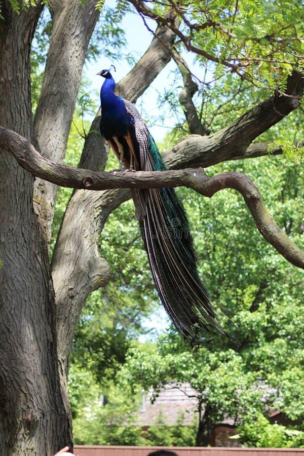 siedząc drzewo obrazy royalty free