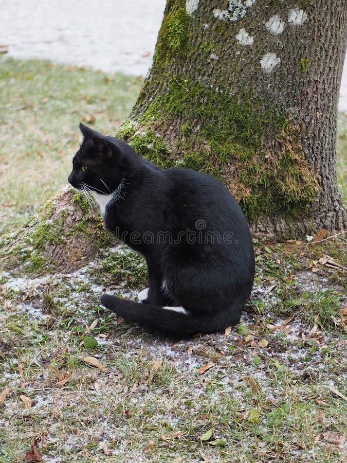 Siedzący czarny kot obok drzewa w zimnym dniu zdjęcie stock