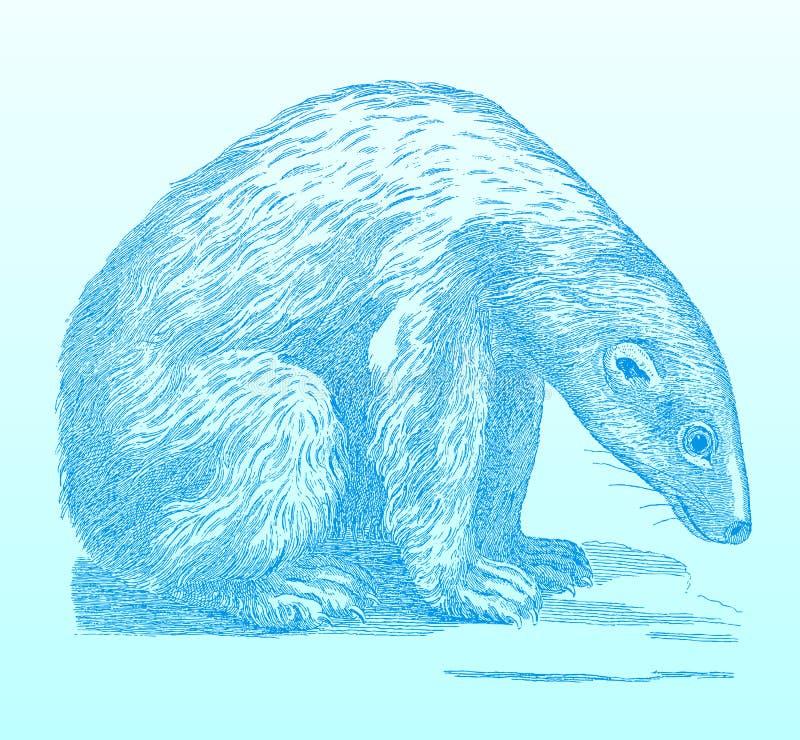 Siedzący niedźwiedź polarny patrzeje z przykrością ziemia ilustracji