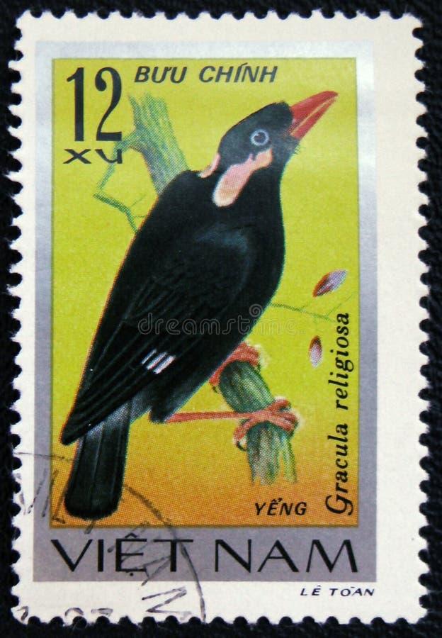 Siedzący ptasi Gracula religiosa, serii ` ptaków śpiewających ` około 1978, obraz royalty free