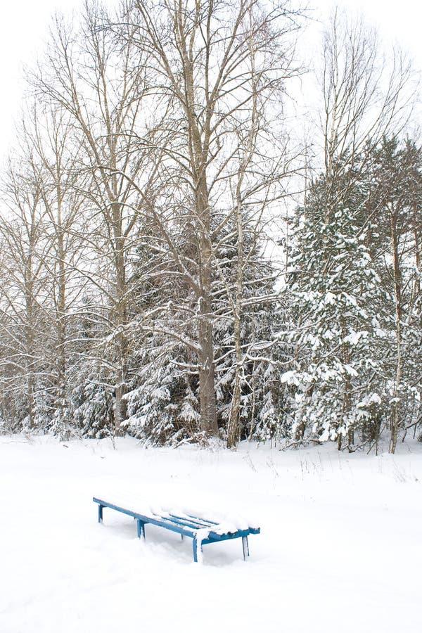siedzi osamotniony śnieżnego obraz royalty free
