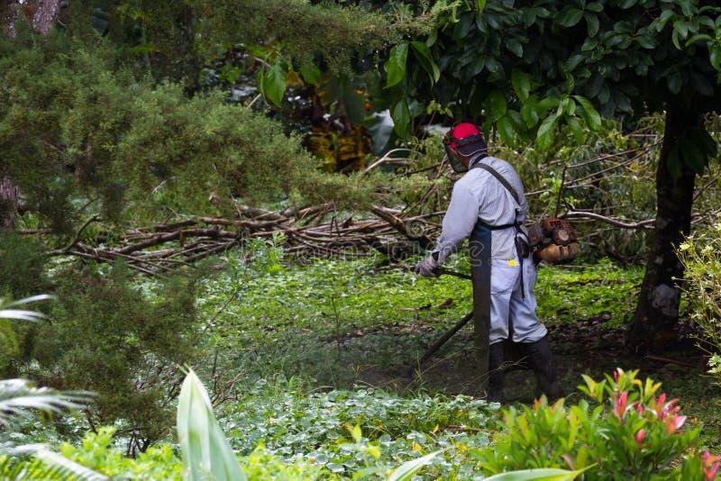 Siega en Costa Rica imágenes de archivo libres de regalías