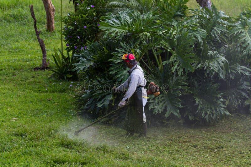 Siega en Costa Rica fotografía de archivo libre de regalías