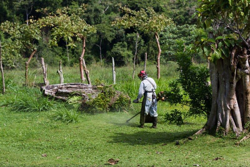 Siega en Costa Rica imagen de archivo libre de regalías