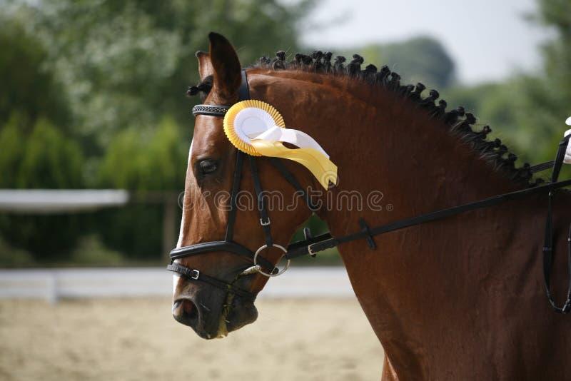 Sieger, der Pferd mit schönen Verzierungen unter dem Sattel kleidet lizenzfreie stockfotografie