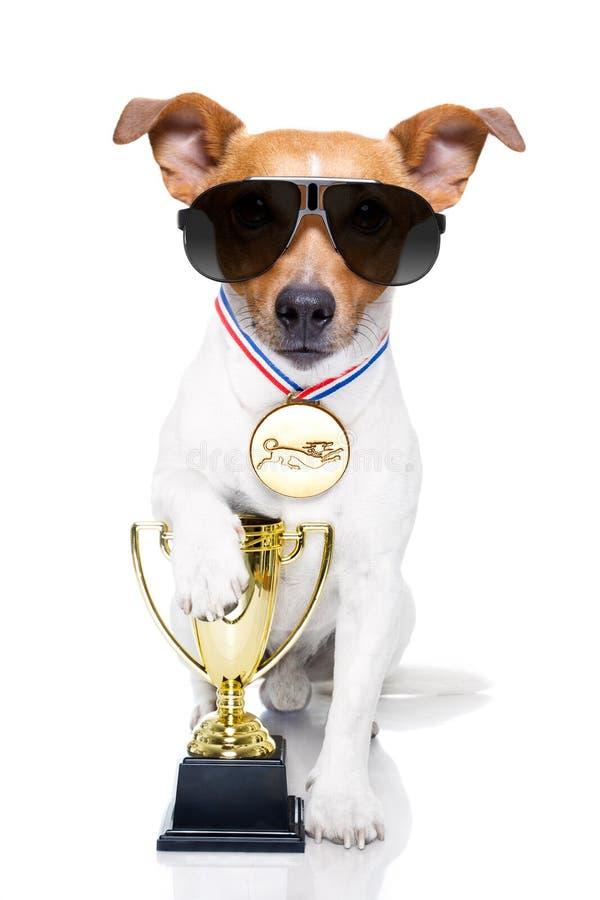 Siegertrophäenhund lizenzfreie stockbilder