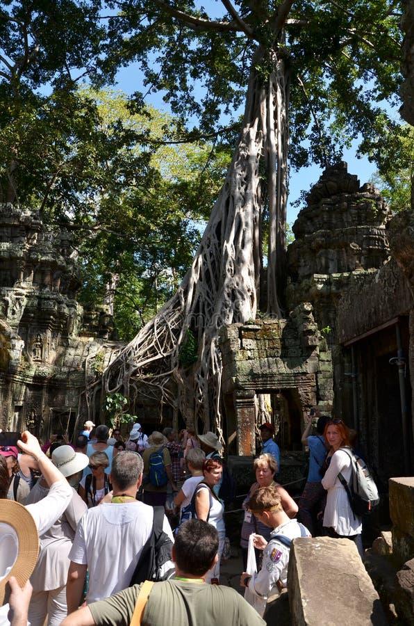 Siem oogst, Kambodja - December 3, 2015: De toeristen bezoeken de tempel van Ta Prohm in Angkor, oogst Siem royalty-vrije stock afbeelding