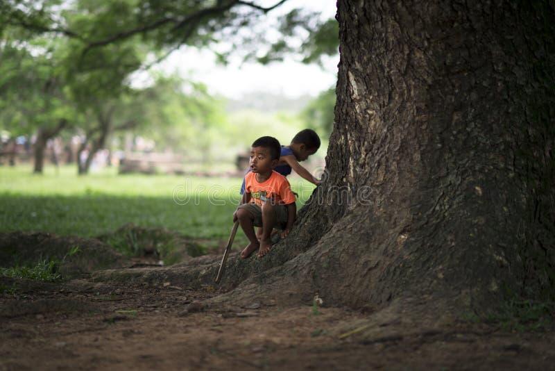 Siem Przeprowadza żniwa, Kambodża - 08 08 2014: Kambodżańscy dzieciaki bawić się w dżungli przy Angkor Wat, Kambodża fotografia stock