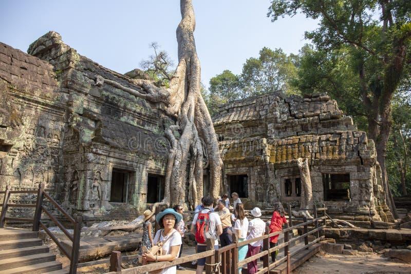 Siem Przeprowadza żniwa, Kambodża - 26 Marzec 2018: Azjatyccy turyści w antycznej świątyni Turysta grupa w Ta Prohm świątyni zdjęcia stock