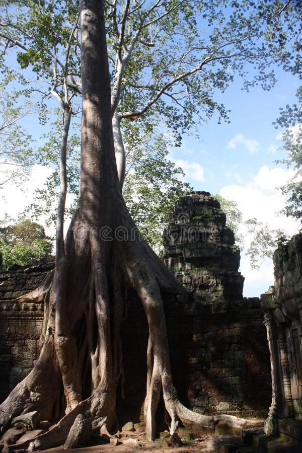 Download Siem Reap stock photo. Image of cambodia, temple, ruins - 24308440