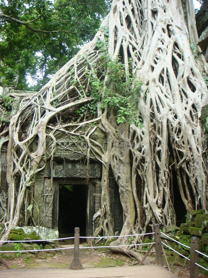 Siem Reap buildings and temples Cambodia. Siem Reap giant historical ancient temples and buildings some restored and some overgrown by trees in Cambodia stock photo