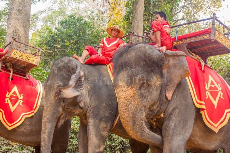 SIEM REAP, CAMBOGIA 24 febbraio 2015: Un cambodian non identificato in nazionale immagini stock libere da diritti