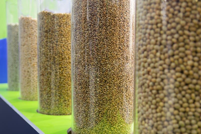 Siembra del material de las cosechas de grano en el soporte de la exposici?n foto de archivo