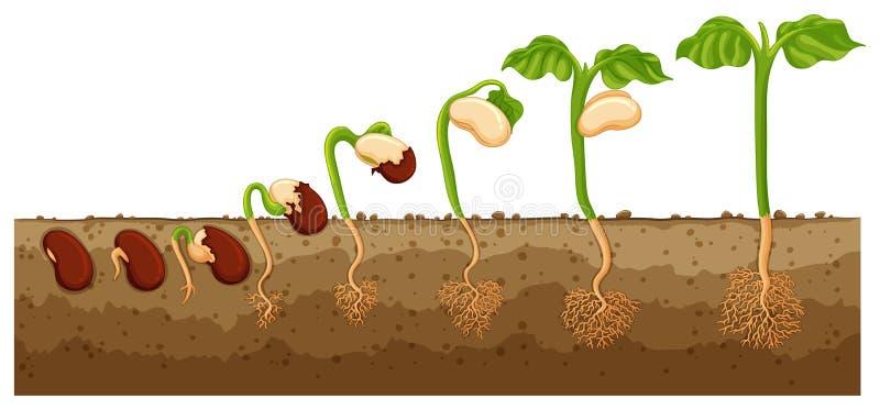 Siembre el crecimiento en árbol stock de ilustración