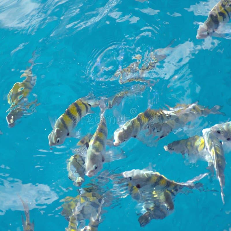 sierżancie plac ryb zdjęcie stock