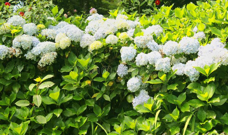 Sier bloeit nutteloos in het bryant park royalty-vrije stock afbeelding