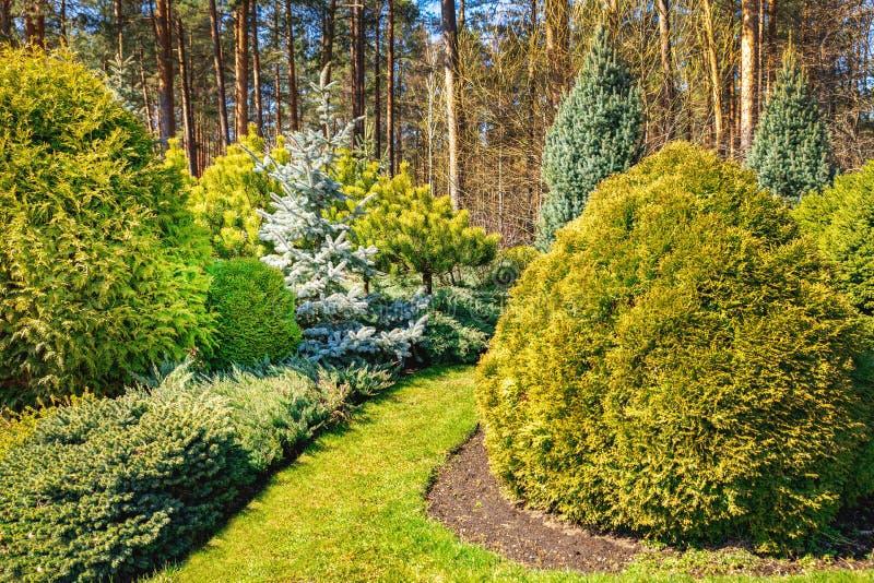 Sier gemodelleerde tuin met naaldbomen stock foto