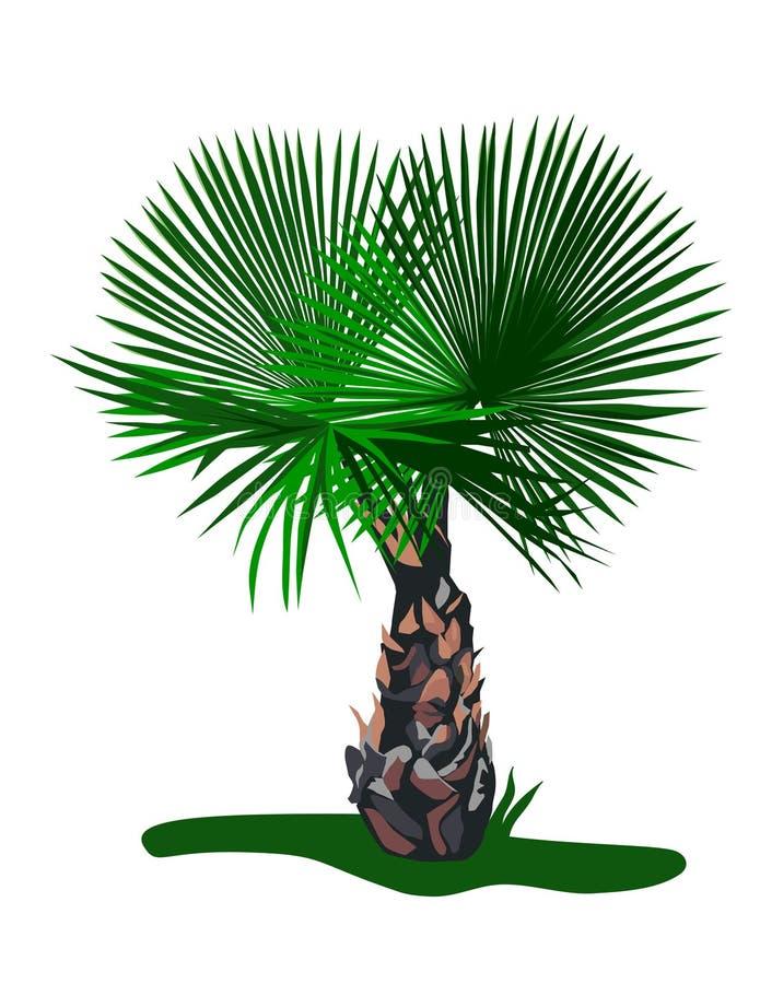 Sier Palm vector illustratie