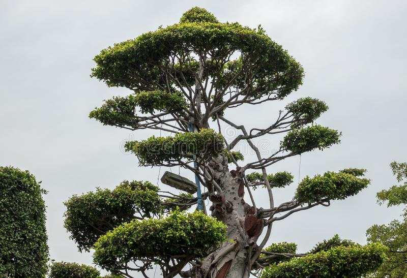 Sier topiary in Bailuzhou-Park in Xiamen royalty-vrije stock fotografie