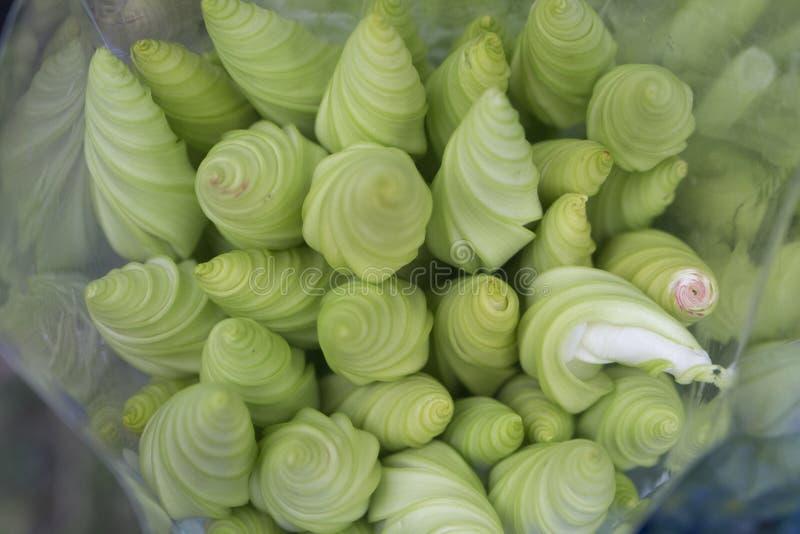 Sierbloemboom stock foto's
