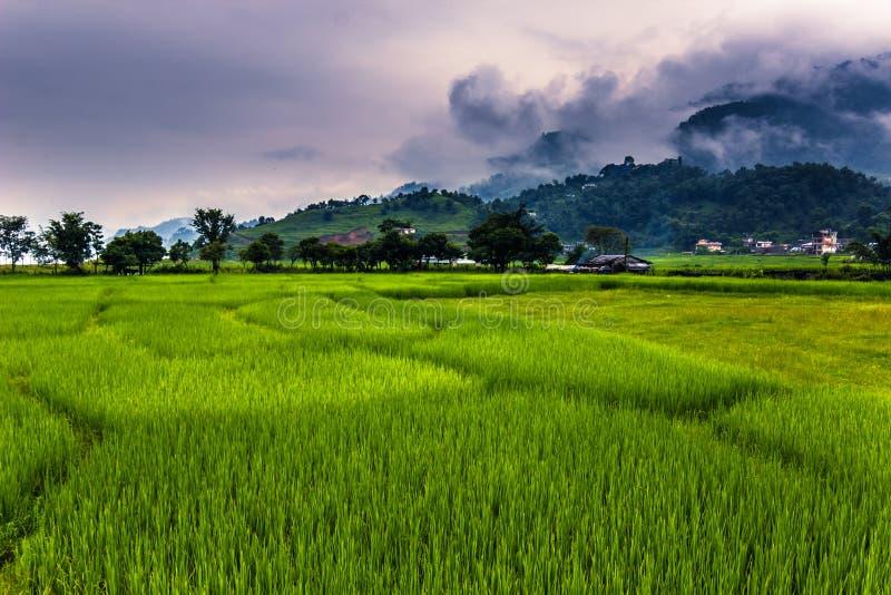 Sierpień 21, 2014 - pola Pokhara, Nepal obrazy royalty free