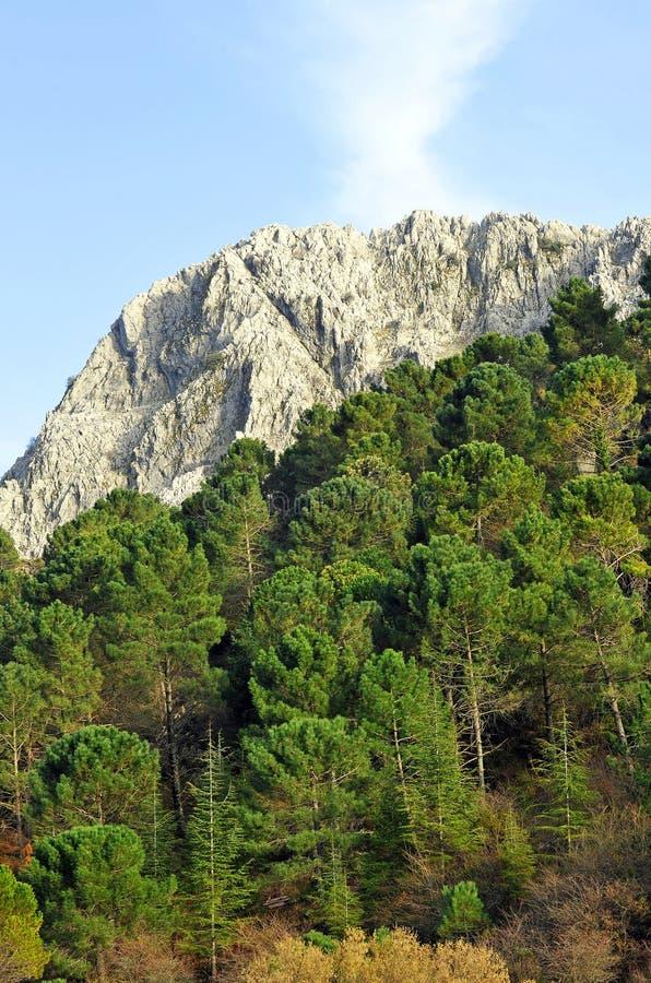 Sierra de Grazalema Natural Park, Cadiz province, Spain stock images