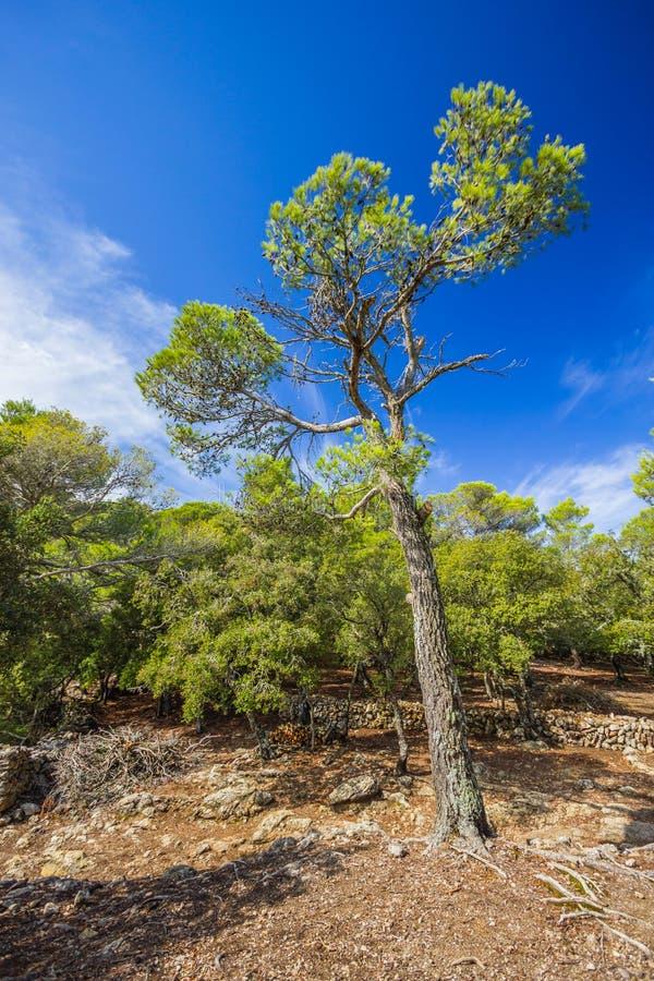 Download Sierra De Tramuntana,马略卡,西班牙 库存图片 - 图片 包括有 吸引力, 蓝色: 72364777