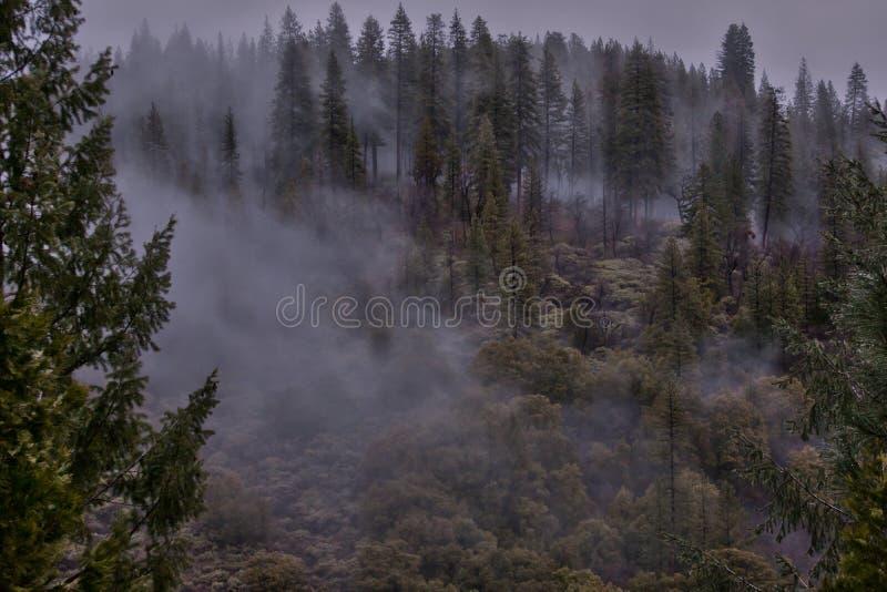 Sierra fog stock photography