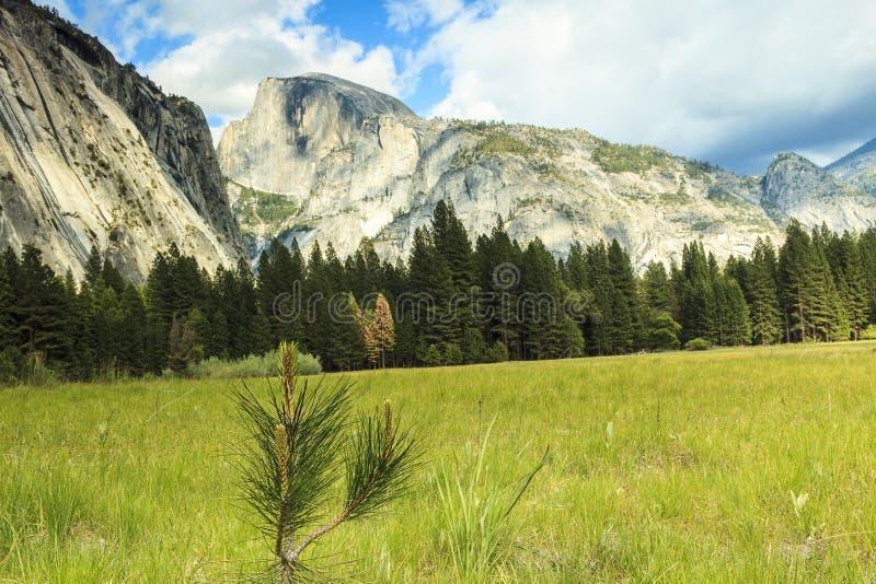 Sierra Mountains i Yosemite N P arkivfoton