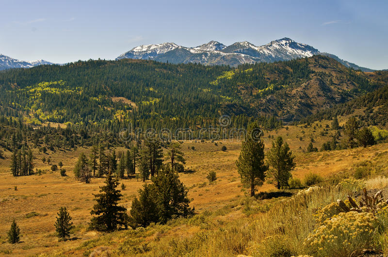 Sierra Nevada Mountains Panoramic, California. Snow-capped mountains, green forests with evergreen trees of the Humboldt-Toiyabe National Forest, and the burned stock image