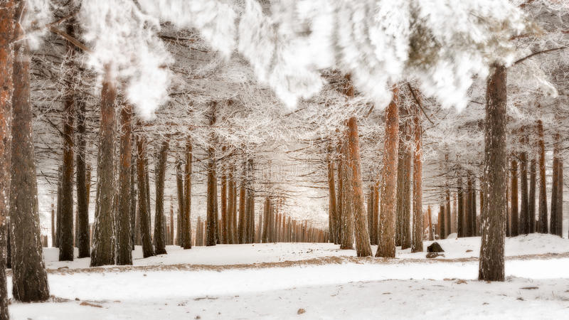 Sierra Nevada. In the winter royalty free stock photo