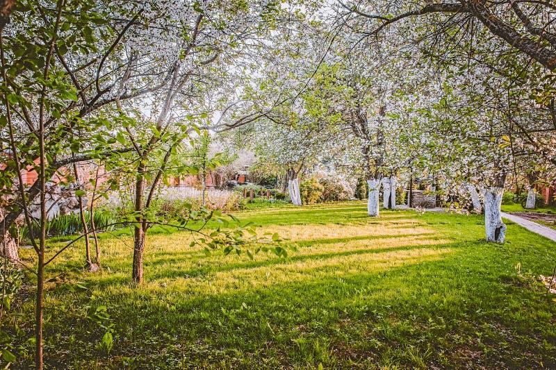 Siertuin met majestically tot bloei komende grote kersenbomen en Apple-bomen op een vers groen gazon royalty-vrije stock fotografie