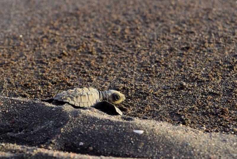 Siesta de la tortuga de mar imagen de archivo libre de regalías
