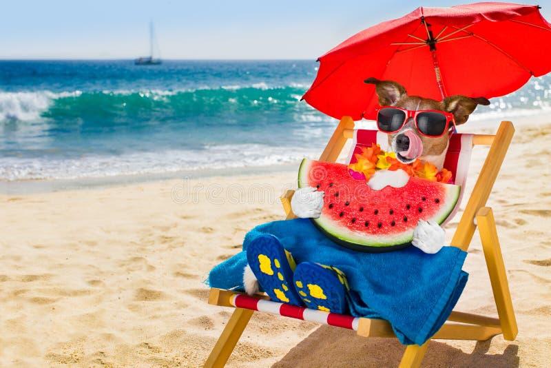 Siesta del cane sulla sedia di spiaggia immagini stock libere da diritti