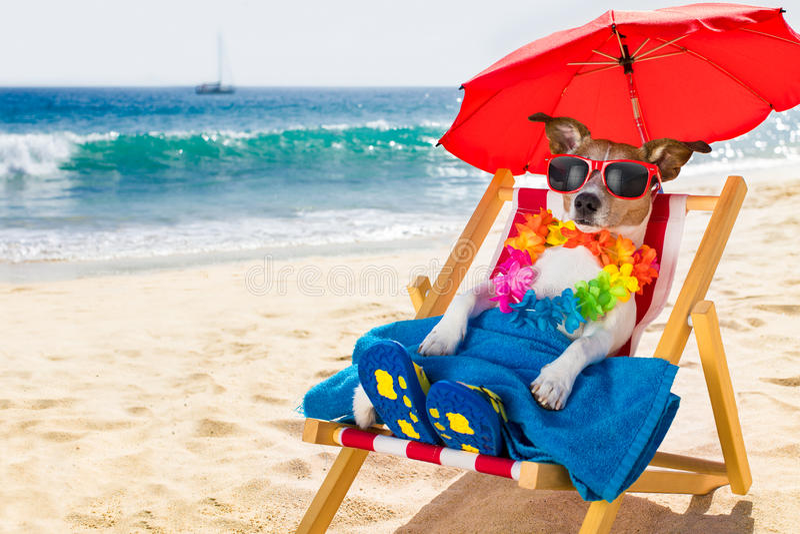 Siesta del cane sulla sedia di spiaggia immagini stock
