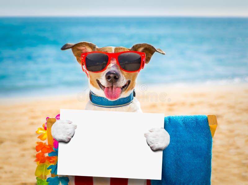 Siesta del cane sulla sedia di spiaggia fotografie stock