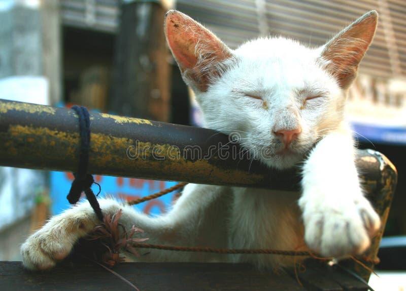 Siesta del gatito fotografía de archivo