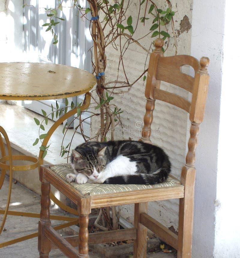 Siesta disperso do gato foto de stock royalty free
