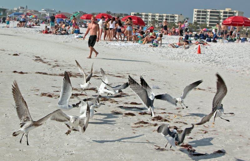 Siesta-Strand, Florida Der kühlste Strand-Sand stockfotografie