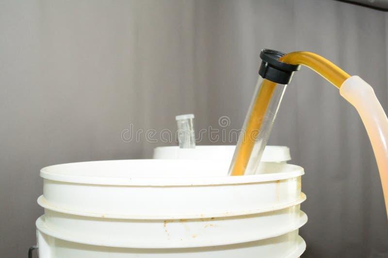 Sifonamento della birra con un sifone dal secchio primario di fermentazione fotografie stock libere da diritti